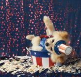 El perro patriótico americano del tío Sam pronunciar discurso de la elección pierde vagos Foto de archivo libre de regalías