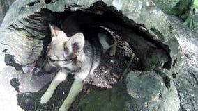 El perro perdido de la marioneta duerme en un hueco de madera en un bosque almacen de metraje de vídeo