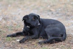 El perro perdido del patio trasero inofensivo negro miente en la hierba Fotografía de archivo