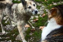 El perro perdido persiguió el gato en la cerca Rotura de la gente Fotos de archivo libres de regalías
