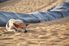 El perro perdido que miente en la playa de la arena en Sri Lanka Fotografía de archivo libre de regalías