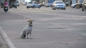 El perro perdido se sienta en el camino con el paso de los coches y de las motocicletas Asia, Tailandia Cámara lenta almacen de video