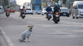 El perro perdido se sienta en el camino con el paso de los coches y de las motocicletas Asia, Tailandia Cámara lenta metrajes