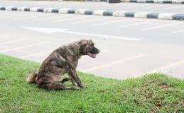 El perro perdido solo vive en parque Imágenes de archivo libres de regalías
