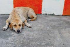 El perro pone completamente en el piso fotos de archivo libres de regalías