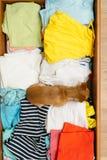 El perro que ocultó en el pecho Imagen de archivo libre de regalías
