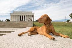 El perro que viaja Foto de archivo
