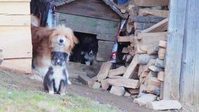 El perro raspa y los perritos en una caja en