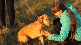 El perro realiza comando de dar la pata del dueño La muchacha está caminando con el perro metrajes