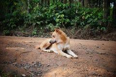 El perro relajarse fotografía de archivo