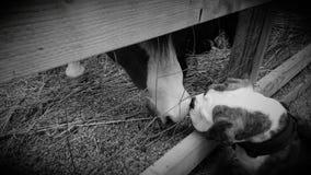El perro resuelve el caballo Foto de archivo