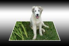 El perro sale la foto Imágenes de archivo libres de regalías