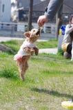 El perro salta Imágenes de archivo libres de regalías