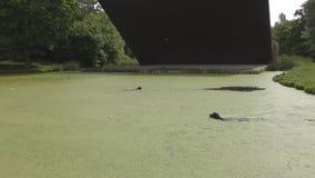 El perro salta en el lago almacen de metraje de vídeo