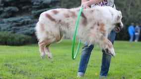 El perro salta a través del aro