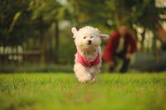 El perro se ejecuta en la hierba Foto de archivo libre de regalías