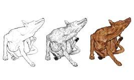 Rasguño del perro Fotografía de archivo