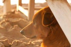 El perro se está sentando en la puesta del sol fotos de archivo
