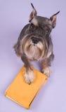 El perro se sienta Fotos de archivo libres de regalías