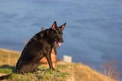 El perro se sienta en el coste Imagen de archivo libre de regalías