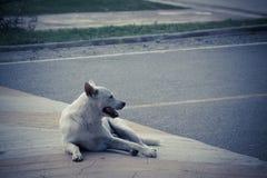 El perro se sienta y el esperar Imágenes de archivo libres de regalías