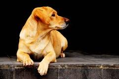 El perro se sienta y espera Foto de archivo libre de regalías