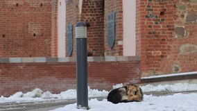 El perro sin hogar congela en la nieve cerca del edificio almacen de video