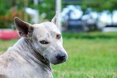 El perro sin hogar está mirando la cámara Imagenes de archivo