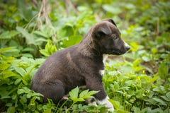 El perro sin hogar infeliz ese vive subterráneo Perro en jardín Fotografía de archivo
