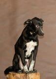 El perro sin hogar lanzado por la gente Imagen de archivo