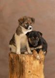 El perro sin hogar lanzado por la gente Fotografía de archivo