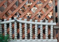 El perro sin hogar lanzado por la gente Imagenes de archivo
