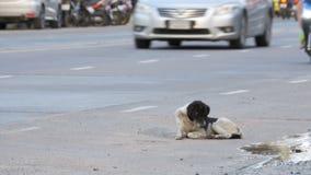 El perro sin hogar miente en City Road con el paso de los coches y de las motocicletas Asia, Tailandia almacen de metraje de vídeo