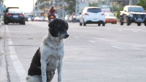 El perro sin hogar se sienta en City Road con el paso de los coches y de las motocicletas Asia, Tailandia almacen de video