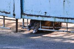 El perro sin hogar triste está mirando hacia fuera la cerca Concepto del cuidado animal Fotos de archivo libres de regalías