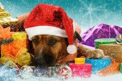El perro sitiado por la nieve grande está esperando la Navidad Foto de archivo