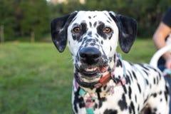 El perro soñoliento al lado del dueño en el ordenador fotografía de archivo libre de regalías