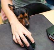El perro soñoliento al lado del dueño en el ordenador imagenes de archivo