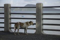 El perro solo Fotos de archivo libres de regalías