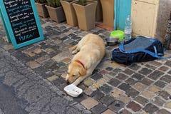 El perro solo triste Imagenes de archivo