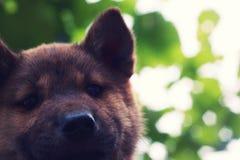 El perro sonriente Imagen de archivo