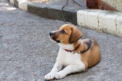 El perro sucio miente abajo esperando alguien Imagenes de archivo