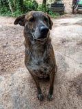 El perro imágenes de archivo libres de regalías