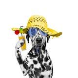 El perro tiene un resto en verano con un vidrio del cóctel Imagen de archivo