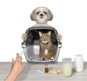 El perro trajo a su amigo del gato al veterinario Foto de archivo libre de regalías