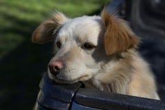 El perro triste espera para salir Fotos de archivo libres de regalías