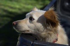 El perro triste espera para salir Imagen de archivo libre de regalías