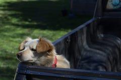 El perro triste espera para salir Foto de archivo libre de regalías