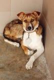 El perro triste que miente en la jaula del refugio, momento emocional triste, me adopta co Imagenes de archivo
