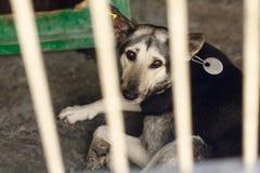El perro triste que miente en la jaula del refugio, momento emocional triste, me adopta co Imagen de archivo libre de regalías